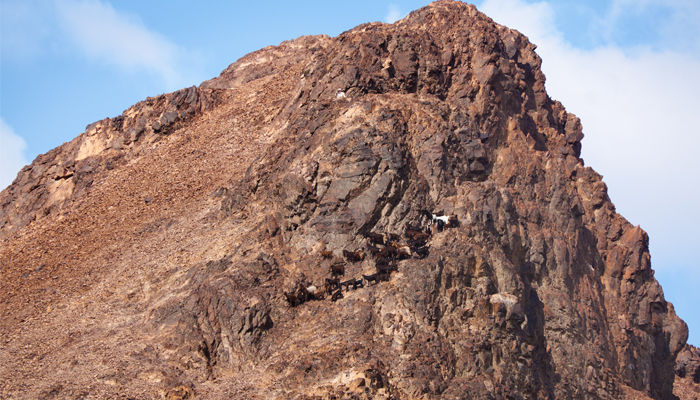 mount sinai muslim dating site Geography mount sinai is a 2,285-metre (7,497 ft) moderately high mountain near the city of saint catherine in the sinai region it is next to mount catherine (at 2,629 m or 8,625 ft, the highest peak in egypt.